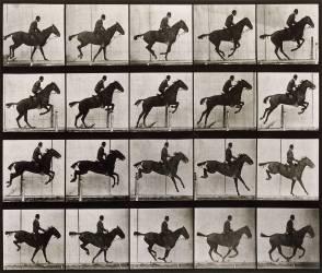 Saut d'obstacle, cheval noir (Muybridge Eadweard) - Muzeo.com