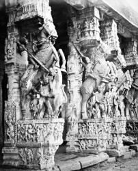 Chevaux taillés dans les piliers du temple de Ranganatha, Srirangam (Samuel Bourne) - Muzeo.com