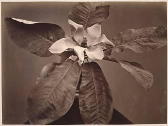 Fleur et feuilles (Charles Aubry) - Muzeo.com