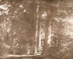 Hêtres de l'abbaye Sainte-Marie de Lacock (William Henry Fox Talbot) - Muzeo.com