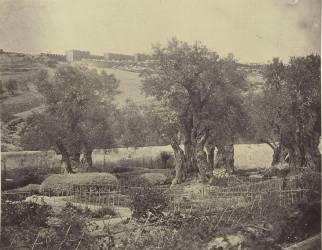 Jardin des Oliviers près de Jérusalem (James D. Robertson) - Muzeo.com