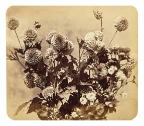 Sans Titre (Adolphe Braun) - Muzeo.com