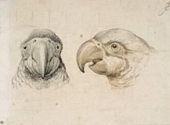 Deux têtes de perroquets (Charles Le Brun) - Muzeo.com