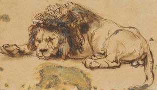 Etude de lion (Rembrandt) - Muzeo.com