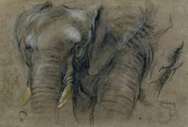 Etude d'une tête d'éléphant (Boel Pieter) - Muzeo.com