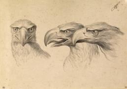 Trois têtes d'aigles (Le Brun Charles) - Muzeo.com