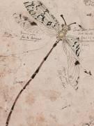 Libellule (Gallé Emile (atelier de)) - Muzeo.com