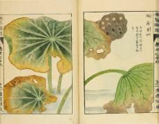 Honzô zufu (Iwasaki Jôshô) - Muzeo.com