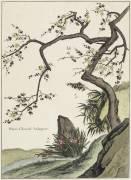 Plante Chinoise (aubépine) (Chastillon Louis de) - Muzeo.com