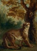 Le Puma, dit aussi Lionne guettant une proie (Eugène Delacroix) - Muzeo.com