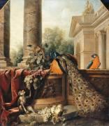 Nature morte au paon (Desportes Alexandre François) - Muzeo.com
