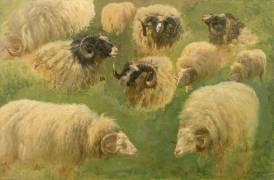 Béliers et moutons à tête noire, 10 esquisses (Bonheur Rosa) - Muzeo.com