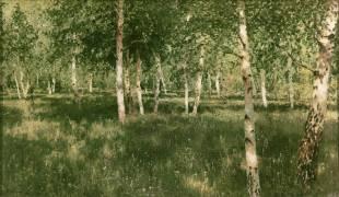 Birch Copse (Isaac Ilitch Levitan) - Muzeo.com