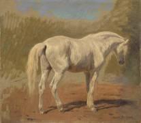 Etude de cheval blanc (Bonheur Rosa) - Muzeo.com