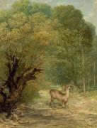 Le chevreuil chassé aux écoutes, le printemps (Gustave Courbet) - Muzeo.com