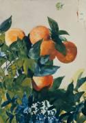 Oranges sur une branche (Winslow Homer) - Muzeo.com