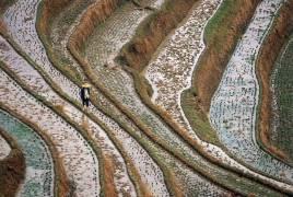 IN*Chine, province de Guangxi, rizière (Alessandra Meniconzi) - Muzeo.com