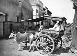 Bombay Hackery (Francis Frith) - Muzeo.com